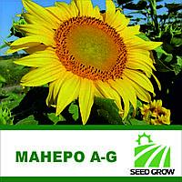 Семена подсолнечника МАНЕРО A-G