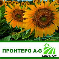 Семена подсолнечника ПРОНТЕРО A-G
