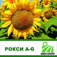 Семена подсолнечника РОКСИ A-G