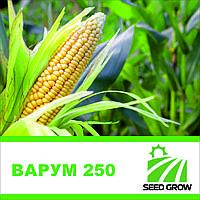 Кукуруза ВАРУМ 250
