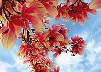 Фотообои *Престиж* № 47 Цветы магнолии  (196х272)