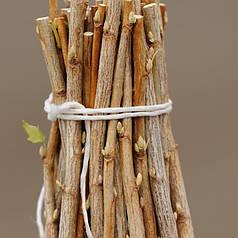 Черенки смородины Титания (Titania)