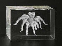 Сувенир хрустальный Паук голограмма лазерная
