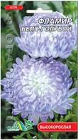 Астра Фламир бело-голубой