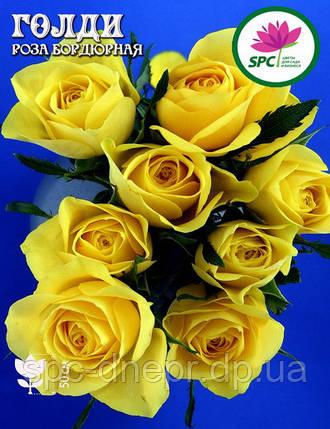 Роза бордюрная, спрей Голди(Shani), фото 2