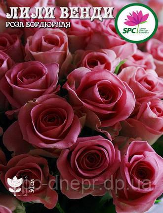 Бордюрные саженцы роз, спрей Лили Венди, фото 2