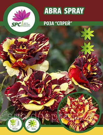 Роза бордюрная, спрей Abra Spray, фото 2