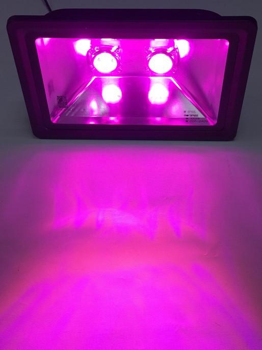 Светодиодный линзованный фитопрожектор SL-170 Lens 100W черный IP65 Код.57708