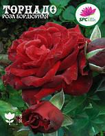 Роза бордюрная, спрей Tornado