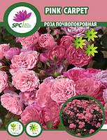 Роза почвопокровная Pink Carpet
