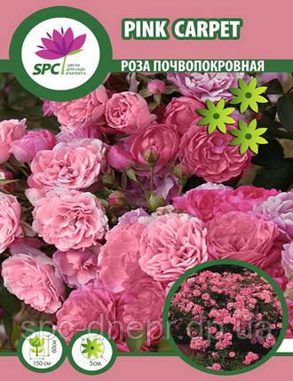 Роза почвопокровная Pink Carpet (один пагон), фото 2