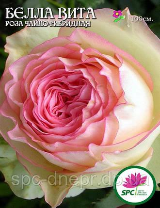 Роза чайно-гибридная Bella Vita, фото 2
