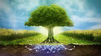 СУШЕНЫЕ РАСТЕНИЯ (травы, плоды, корни, цвет)