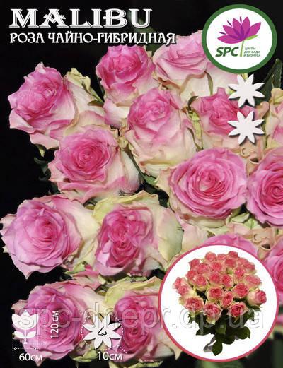 Роза чайно-гибридная Malibu