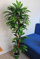 Манго красивый ствол искусственное дерево