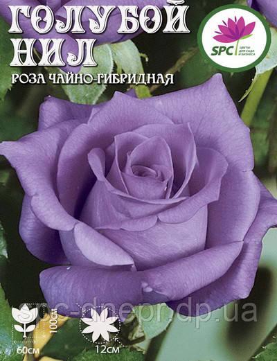 Роза чайно-гибридная Blue Nile
