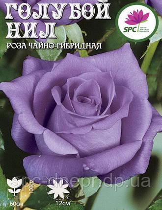 Роза чайно-гибридная Blue Nile, фото 2