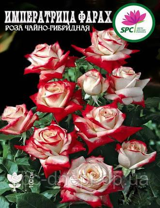 Роза чайно-гибридная Imperatrice Farah, фото 2