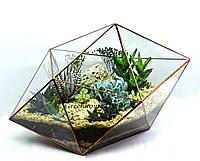 """Флорариум """"Гексадекаэдр"""" с живыми неприхотливыми растениями (суккулентами)-оригинальный подарок!"""