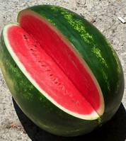 Семена арбуза Онеида F1 (Oneida RZ) Упаковка 1000 семян . Производитель Rijk Zwaan