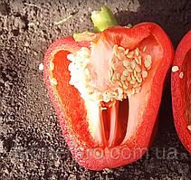 Семена перца 2605 F1 Agri Saaten