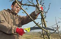 Обрезка и прививка: 10 работ февраля, которые нужно сделать в плодовом саду