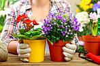 Какие цветы можно сажать на рассаду в феврале