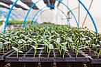 12 работ на огороде, которые нужно сделать в феврале