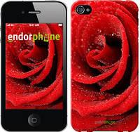"Чехол на iPhone 4 Красная роза ""529c-15-2448"""