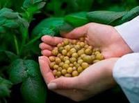Секрет выращивания картофеля без фитофторы и без гмо в 2018 году