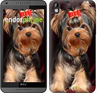 """Чехол на HTC Desire 816 Йоркширский терьер """"929c-169-2448"""""""