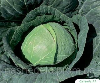 Семена капусты б/к Сателит F1 2500 семян Bejo