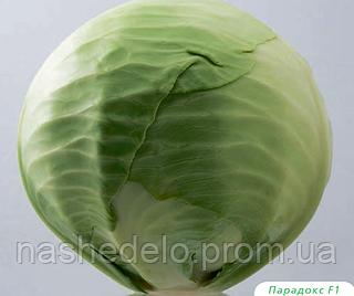 Семена капусты б/к Парадокс F1 2500 семян Bejo