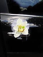Орхидея на присосках