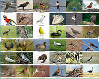 Птахи дикі. Карточки односторонні. 27 шт.