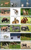 Тварини дикі з дитинчатами . Житло диких тварин. Карточки односторонні. 27 шт.