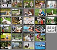 Дії дітей у тваринному світі. Карточки односторонні. 27 шт.