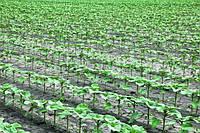 Стрессоустойчивость растений-путь к высоким урожаям