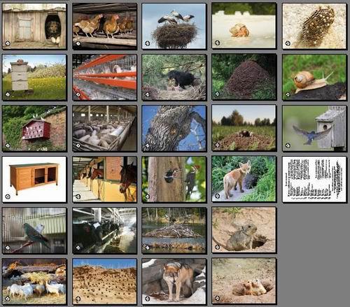 Житло свійських та диких тварин. Карточки односторонні. 27 шт.