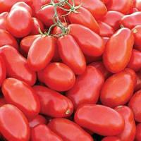 Семена Томата Тейлор F1  5000 семян Nunhems