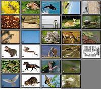 Життя тварин. Карточки односторонні. 27 шт.