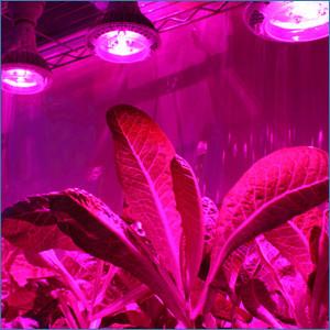 светильники для растений и теплиц