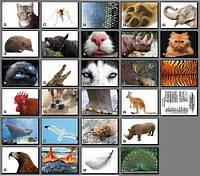 Тілобудова тварин. Карточки односторонні. 27 шт.  8*12 см.