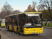 Лобовое стекло на автобус LAZ A 183