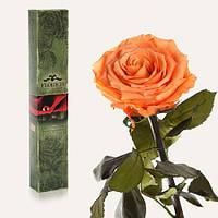 ЗОЛОТИСТЫЙ ХРИЗОБЕРИЛЛ Неувядающая долгосвежая живая роза FLORICH-  7 карат