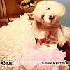 """Платье для собаки, кошки  """"Влюбленный ковбой"""" IS PET. Одежда для собак., фото 3"""