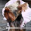 """Платье для собаки, кошки  """"Влюбленный ковбой"""" IS PET. Одежда для собак., фото 4"""