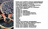 Ягоды асаи – мощный антиоксидант и уникальный витаминный коктейль, 100 табл., фото 8