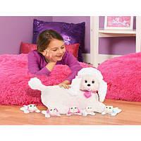 Беременная собака пудель Стейси с сюрпризом  Puppy Surprise Stacy