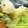 """Платье  """"Беби кактус"""" для собаки, кошки IS PET. Одежда для собак., фото 4"""